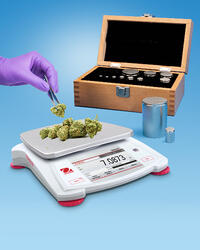 15790 Alliance Cannabis