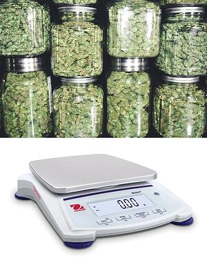 cannabis-scale